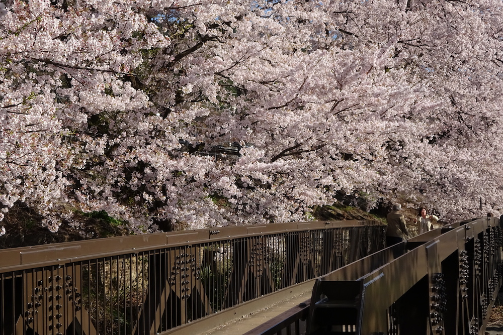 勝沼ぶどう郷の桜