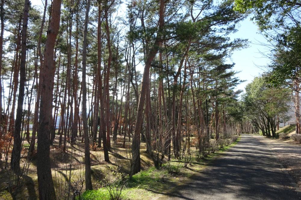 御勅使南公園 赤松林