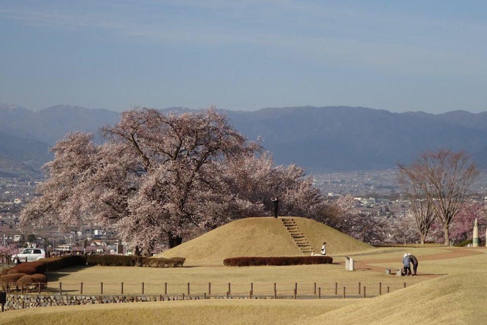 八代ふるさと公園 古墳と桜